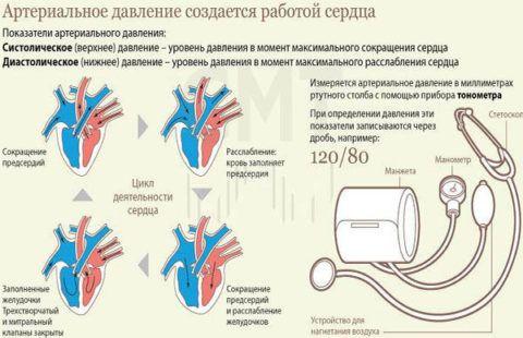 АД напрямую зависит от работы сердца