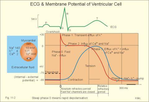 Схематическое изображение, характеризующее возникновение возбуждения в клетке.