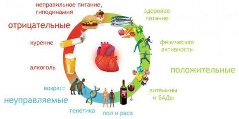 Слева факторы, что приводят к болезням сердца, справа – способствующие здоровью