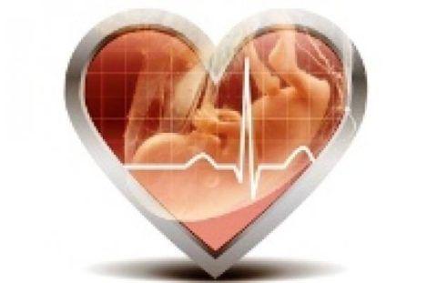Частота сердцебиение плода может меняться в зависимости от многих факторов