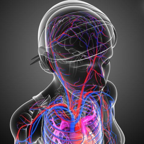 Патологии сердечно-сосудистой системы провоцируют скачки артериального давления в большую и меньшую стороны.