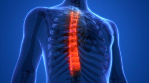 Позвоночник – основа тела, при патологии боль может отдавать в разные места