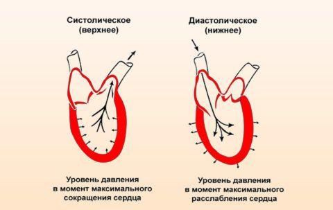 Состояние сердца при систолическом и диастолическом давлении