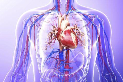 Учащенное сердцебиение встречается практически у каждого кардиологического больного