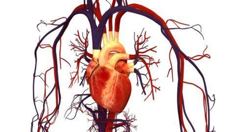Блокада сердечной мышцы