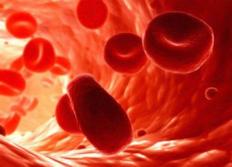 Кровоток организма