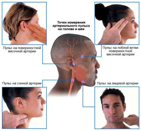 Определения пульса по точкам на голове и шее