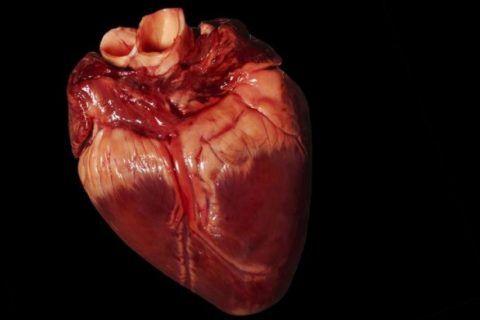 От здоровья органа зависит общее состояние человека и качество его жизни
