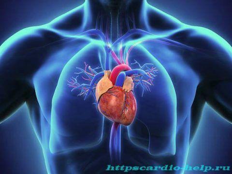 Полноценное циркулирование крови зависит от состояния системы кровеносных сосудов.