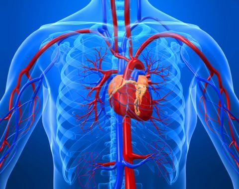 Склеротические изменения аорты обусловлены нарушением обмена холестерина