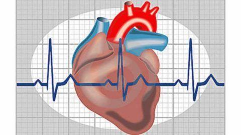 Внеочередные сокращения желудочков называют экстрасистолиями