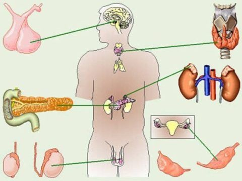 Эндокринные патологии