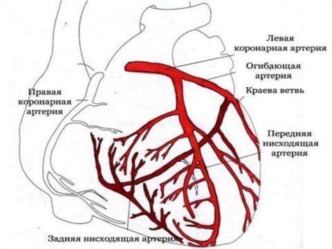Кровоснабжение