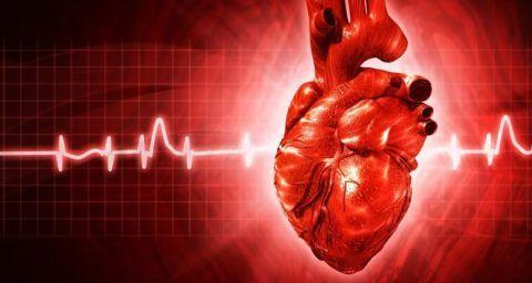 Сердце обеспечивает жизнедеятельность всего организма и сбои в его работе вызывают дисфункцию во всех органах.