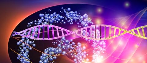 Адренергические рецепторы регулируют АД, сокращение гладкой мускулатуры, обмен и секрецию веществ