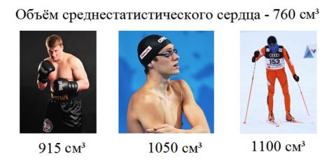 Объёмы сердца у спортсменов
