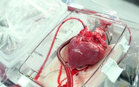 Трансплантация здорового сердца может существенно продлить жизнь