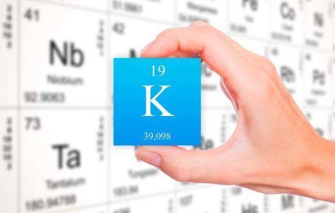 Калий – одни из важных катионов в организме, обеспечивает гомеостаз, нервную иннервацию и др. процессы
