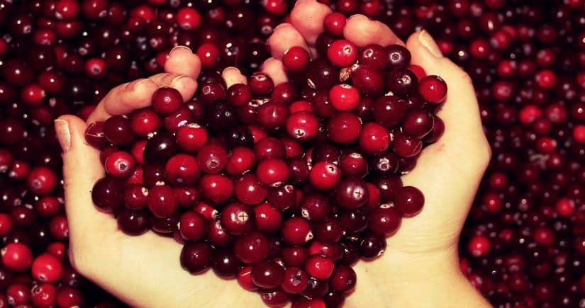 Какие ягоды снижают артериальное давление