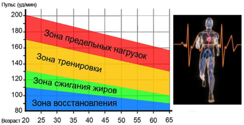 Тренировки в зоне ЧСС выше 200 уд\мин обязательно приведут к истощению миокарда