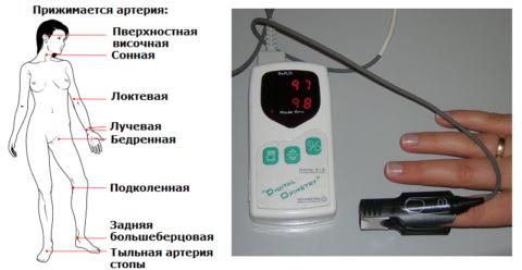 Возможные места пальпации пульса и портативный пульсоксиметр
