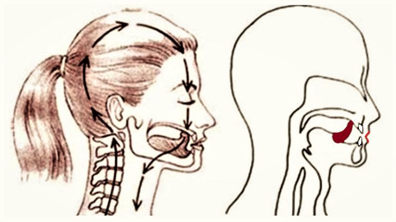 Положение языка, челюстей и губ, усиливающие лечебные эффекты брюшного дыхания
