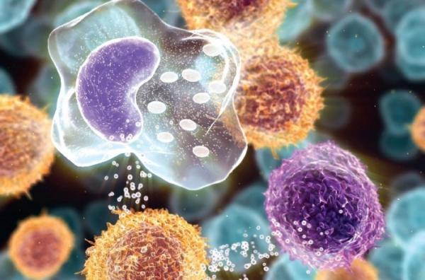 Бактерии выделяют метаболиты, которые являются токсинами, что может при беременности вызвать аномалии плода, в том числе и болезнь Эбштейна