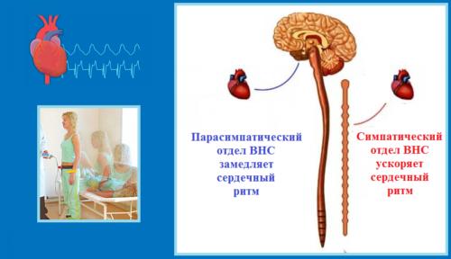 Клиноортостатическая проба характеризует возбудимость симпатической части ВНС