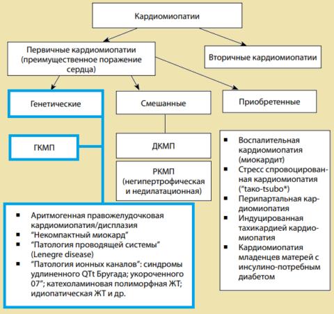 Действующая Общая классификация кардиомиопатий (Maron, Towbin, Thiene, 2006)
