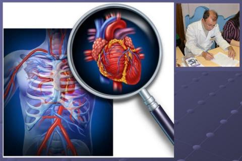 Малая анатомия сердца является составной частью Общей анатомии человека