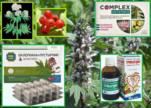 Популярные в РФ комбинированные препараты пустырника (валериана, боярышник, глицин)